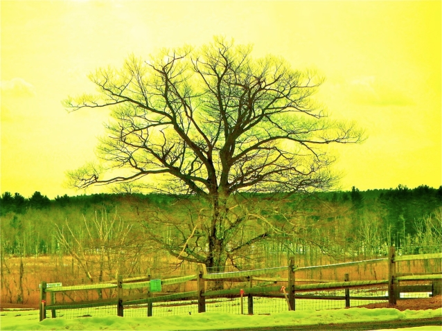 yellow tree copy