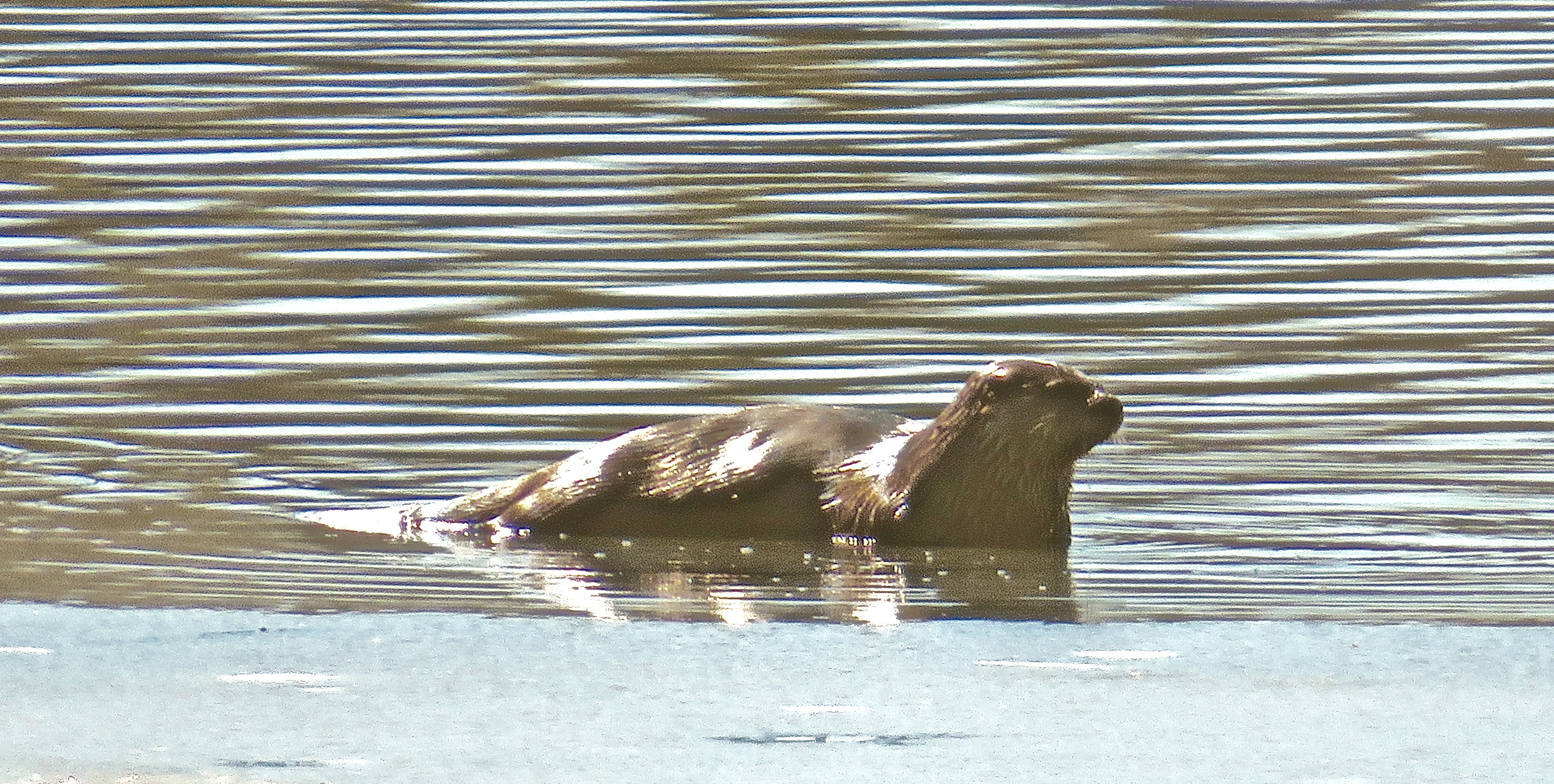 otter one